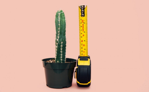 Size of Planters