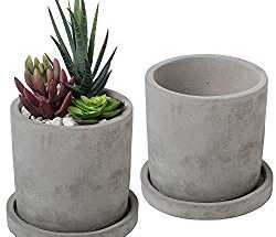 Best Concrete Planters