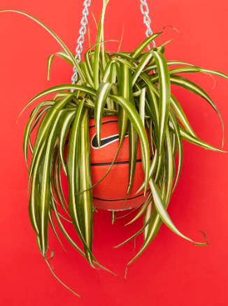 an orange basketball with green vines hanging down by a silver chain in front of a red background