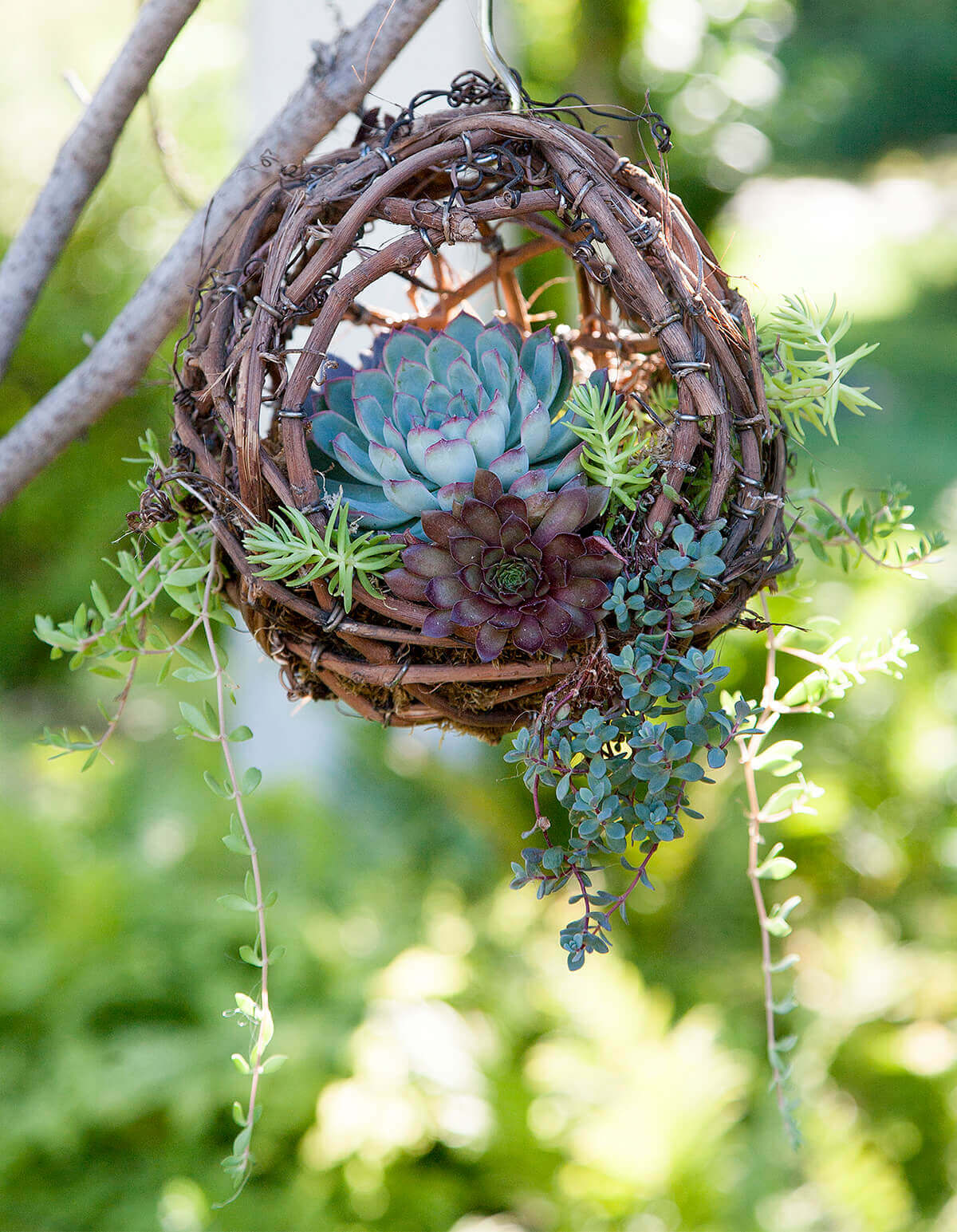 a bird nest planter on a branch with a blue flower in it