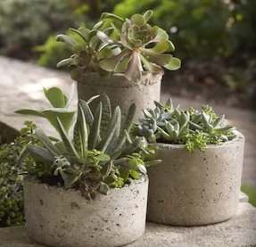 three cement planters with green plants coming out of them