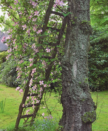 A wooden ladder resting against a large tree trunk with vines and pink flowers interweaving through the ladder rungs