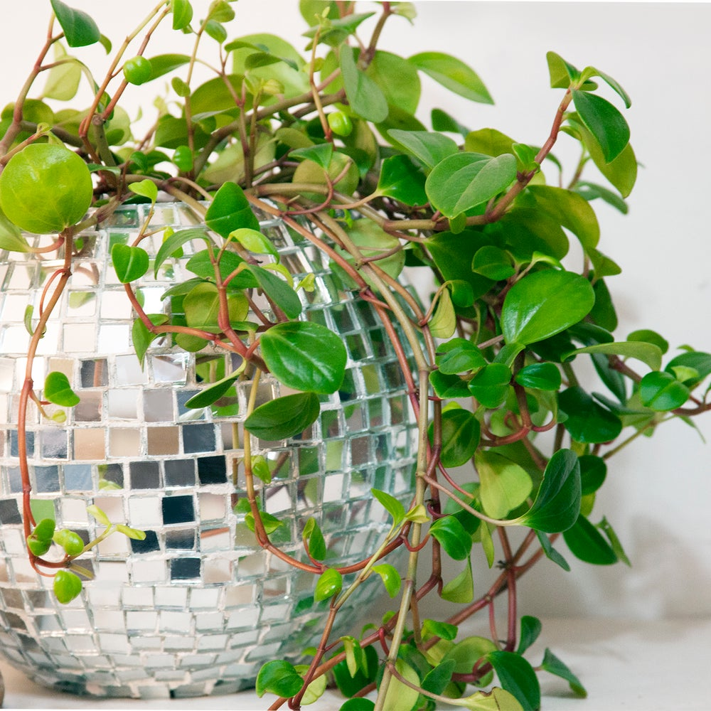 green leaves surrounding a disco ball in front of a white wall