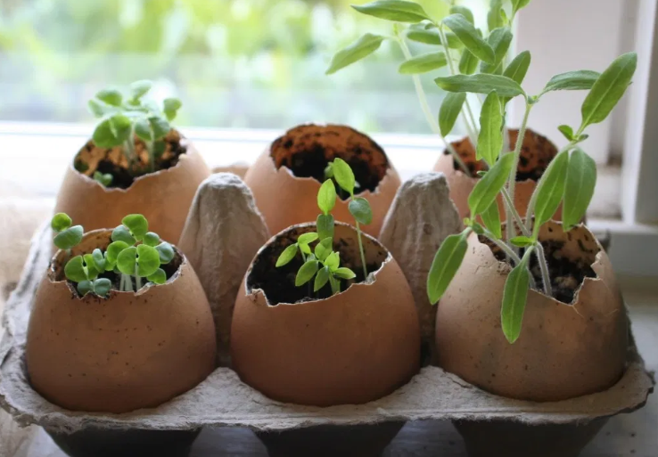 six brown eggshell planters inside an egg carton