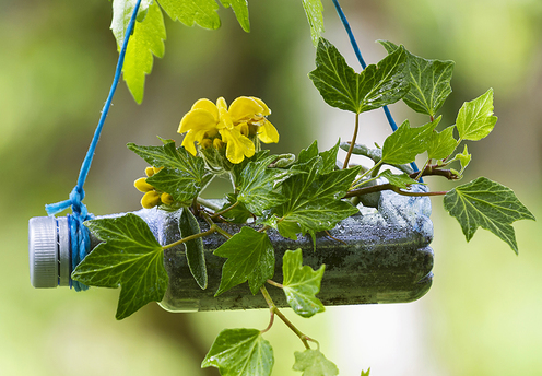 a plastic bottle planter hanging down with green leaves and yellow flowers surrounding it