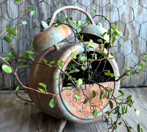 a rusty alarm clock planter placed on brown hard wood floor