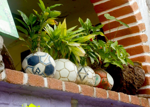 four soccer balls beside each other on a brick ledge with plants coming out of them