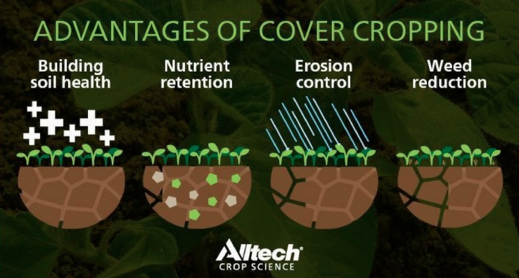 A diagram showing benefits of cover cropping