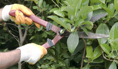 A person pruning their garden plants