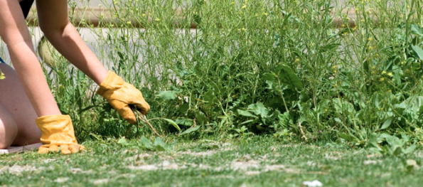 A woman on her hands and knees pulling out weeds from her garden