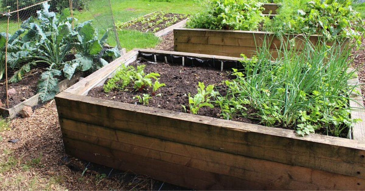 Ideal size of a raised bed garden.