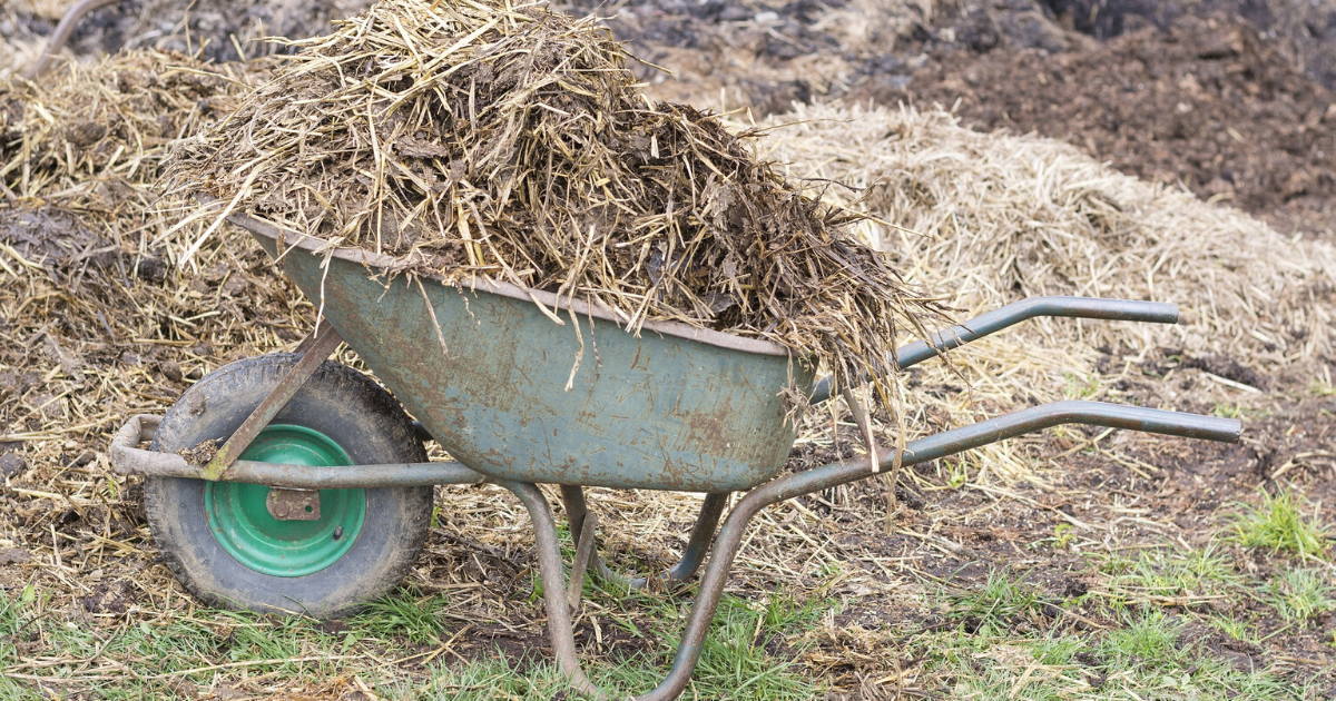 Manure combined with other organic material used as garden mulch.