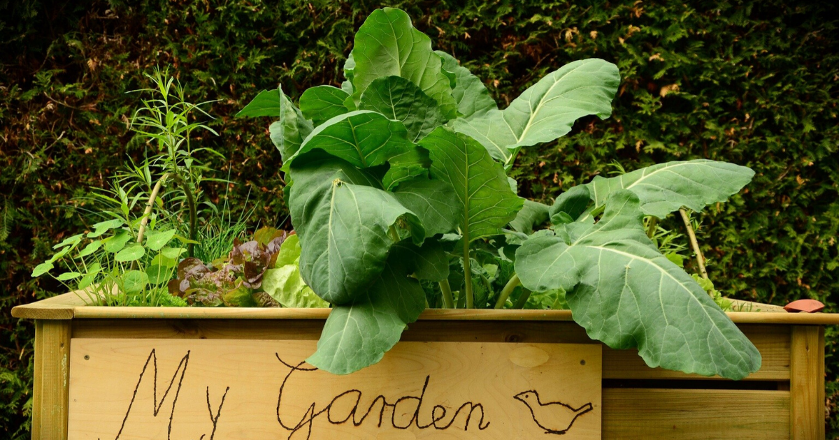 Personalized raised garden bed.