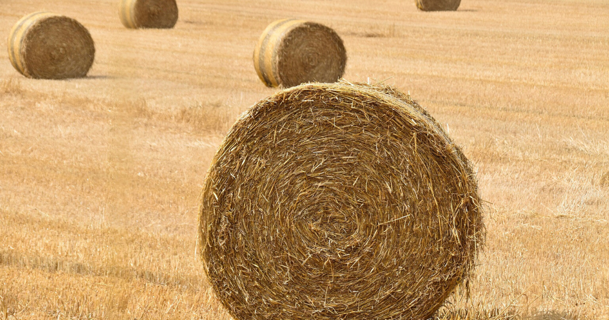 A roll of hay is best for mulching vegetable garden.