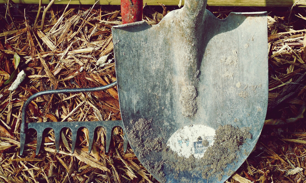 Garden spade and fork in a garden.