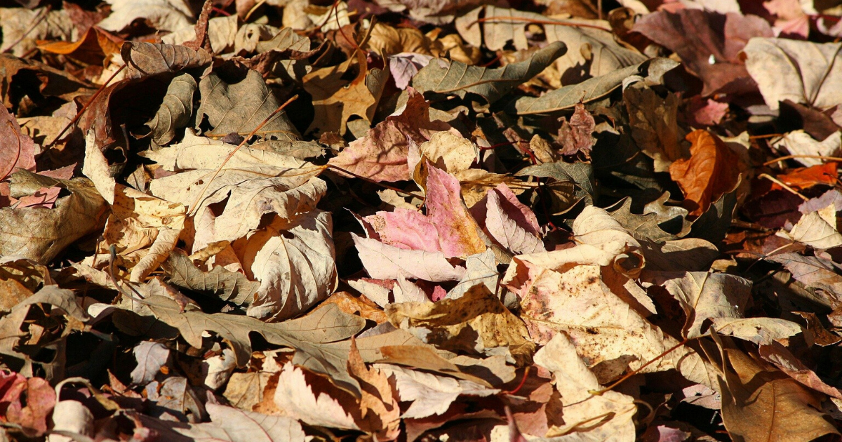 Dried leaves make this garden attractive and tidy.