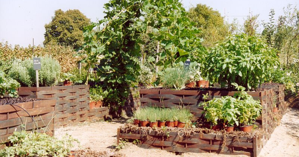 Raised bed garden using recycled materials.