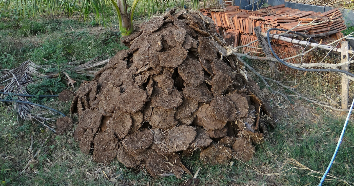 Manure used in gardening.