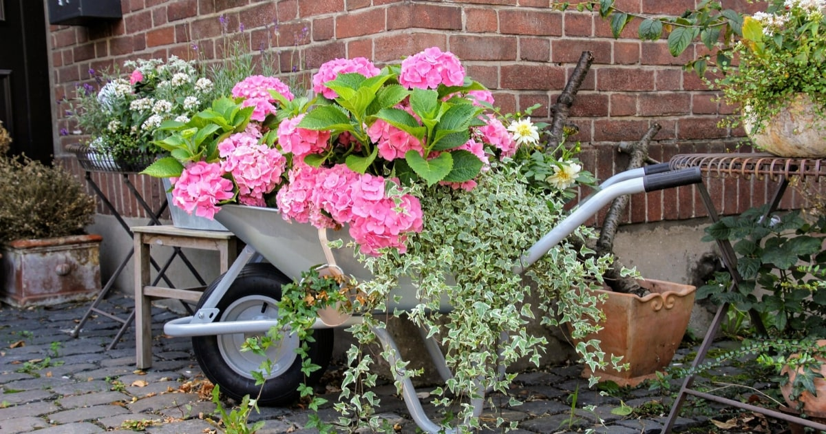 A wheelbarrow is best to use in transporting compost and mulch into your garden bed.