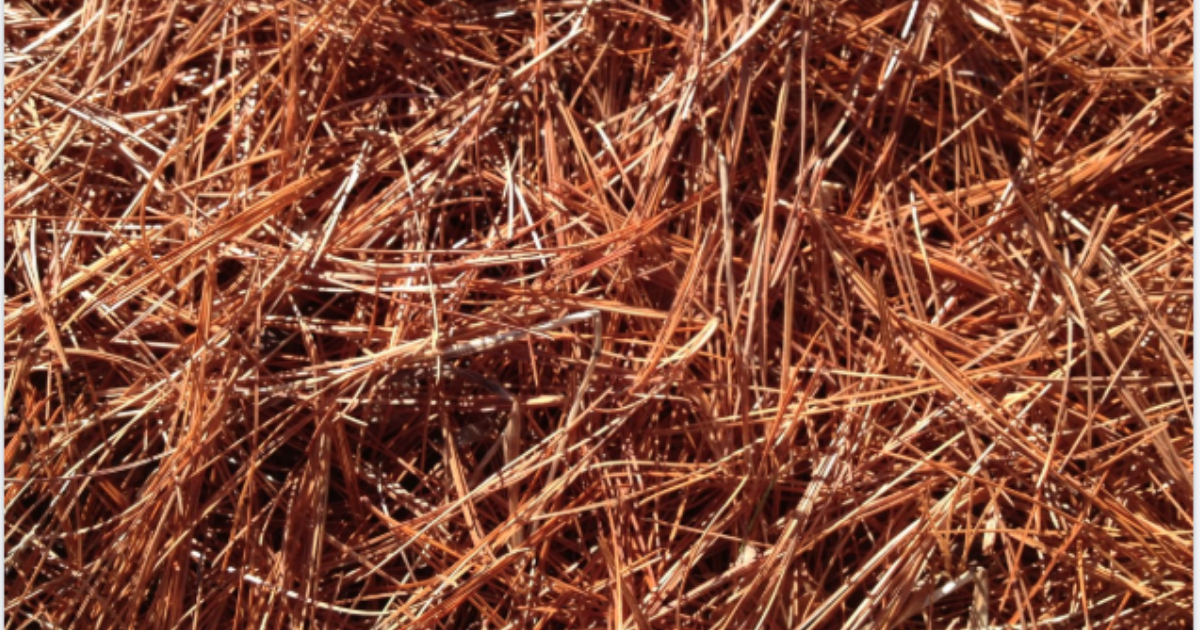 Dried pine needles used in a garden.