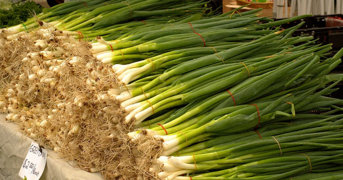 Green onions in the market.