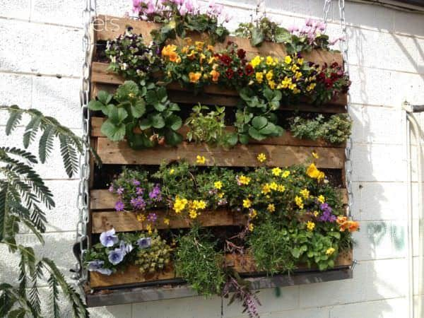Strawberry plants, along with other varieties of flowers in wooden pallets, secured against the wall.