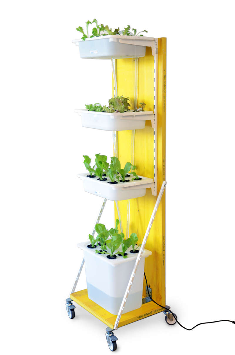Hydroponics vertical gardening using white plastic boxes.