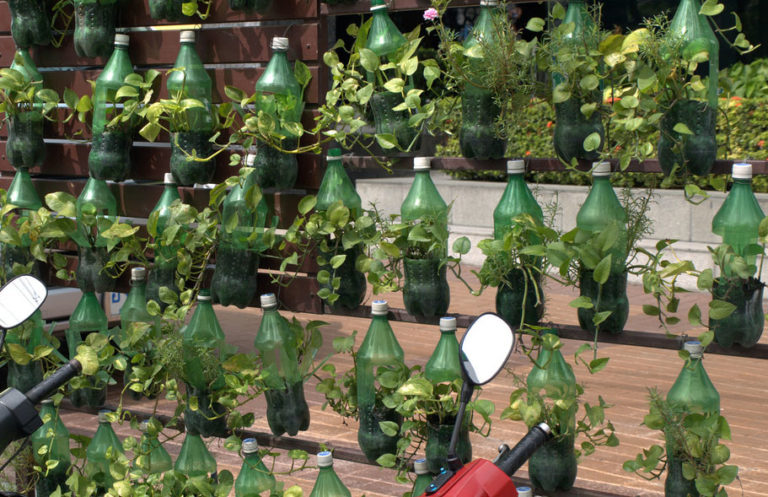 2-liters green plastic soda bottles used in vertical strawberry growing.