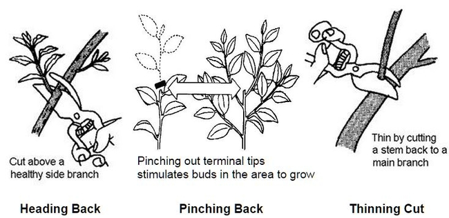 Illustrations on different types of pruning.