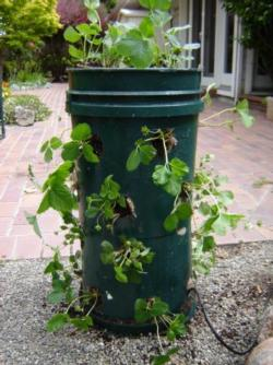 Strawberry plastic bucket tower in the color green.
