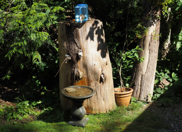 A tree stump birdbath with a gallon of water nested at the top.