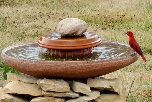 Concrete dish birdbath nested on stacked stones.