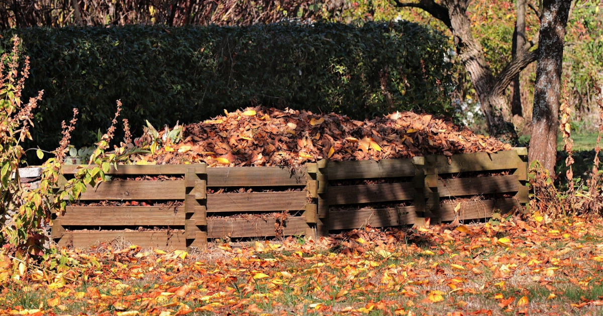 Compost bins full of dried leaves.