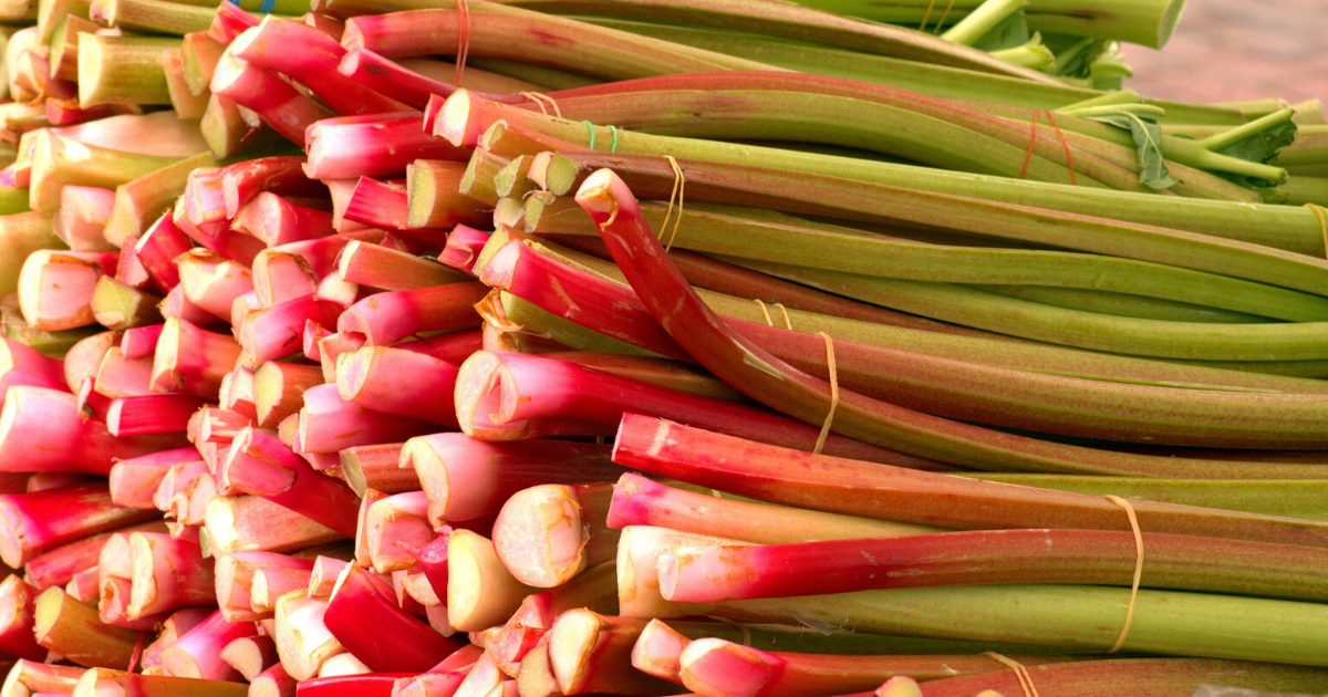 Freshly harvest rhubarb stalks.