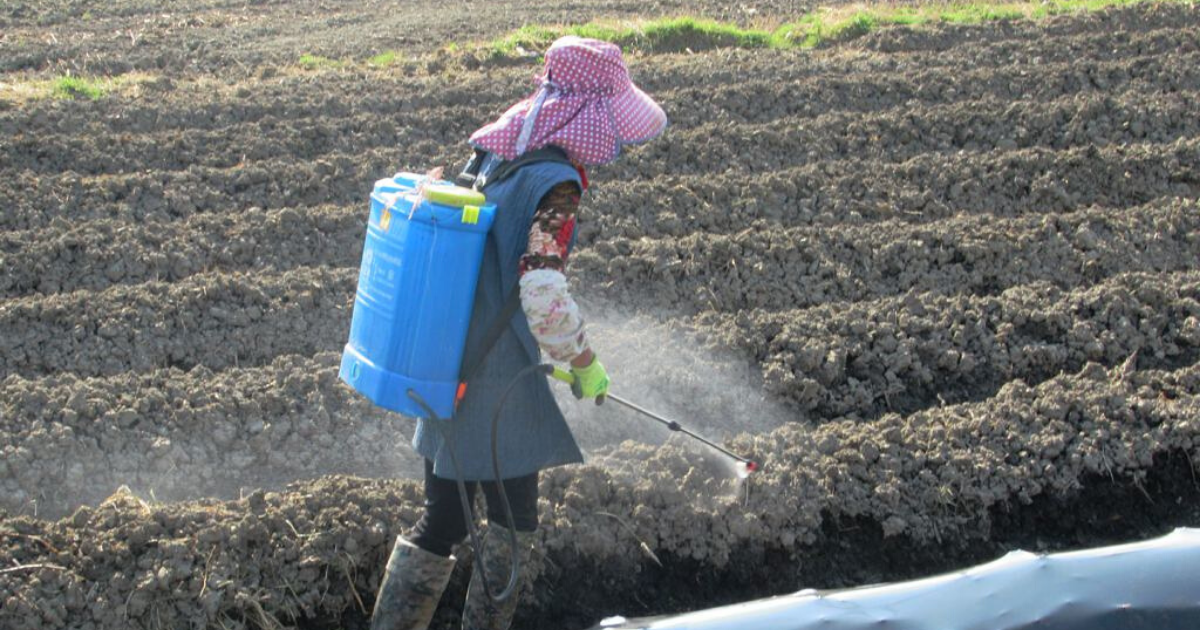 Woman spraying pesticides into the field to prevent potential pests and plant diseases.