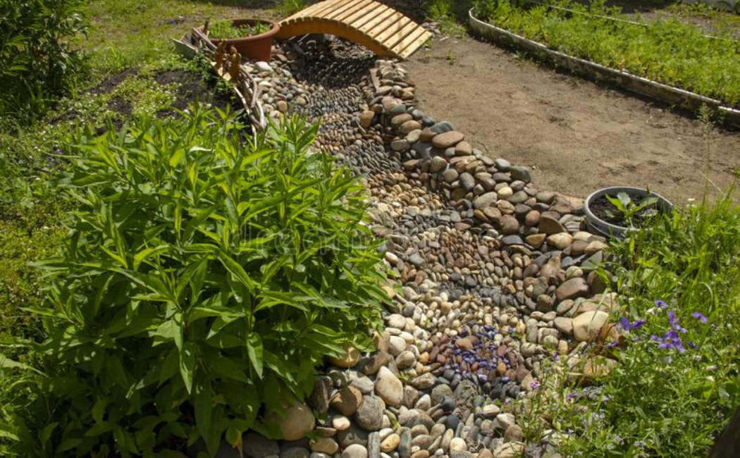 A dry creek bed surrounded by ornamental plants with a cute wooden bridge.
