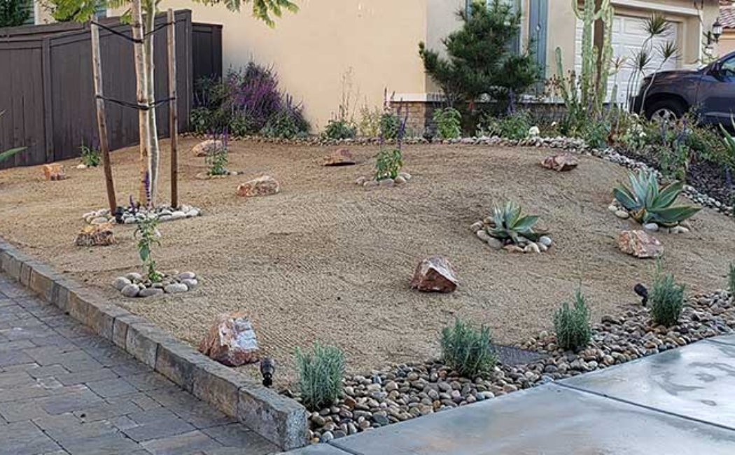 A garden of sand with a minimal number of ornamental plants.
