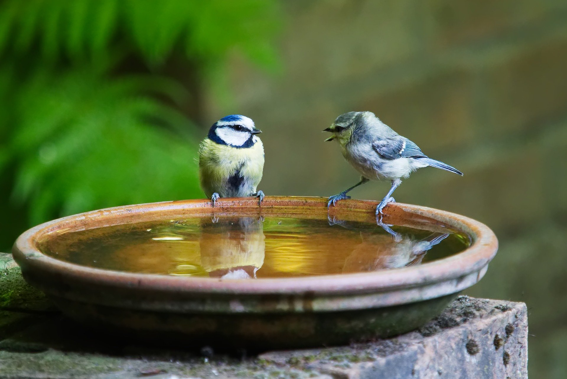 Ceramic dish birdbath nested on an elevated platform.