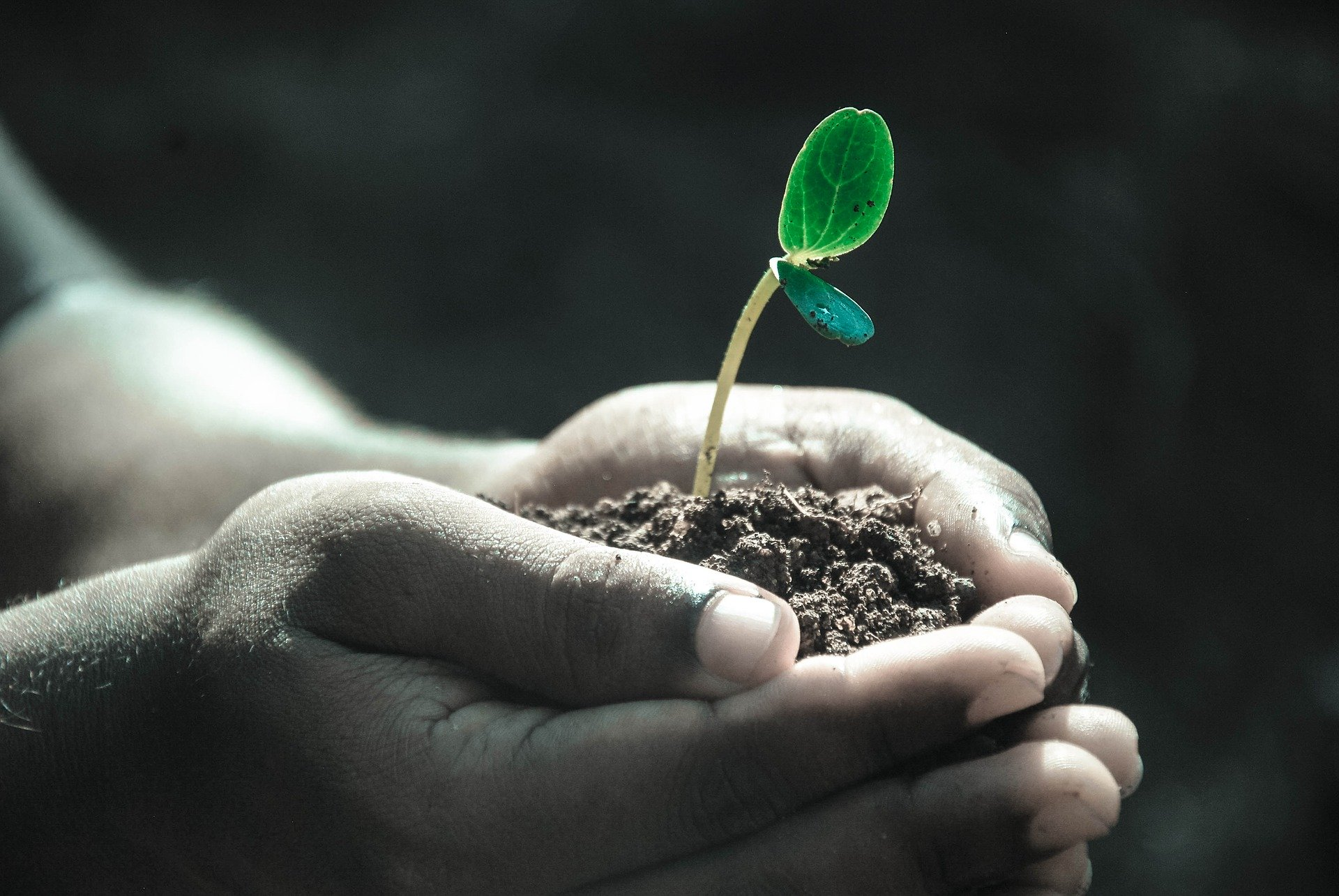 Hand holding a seedling.