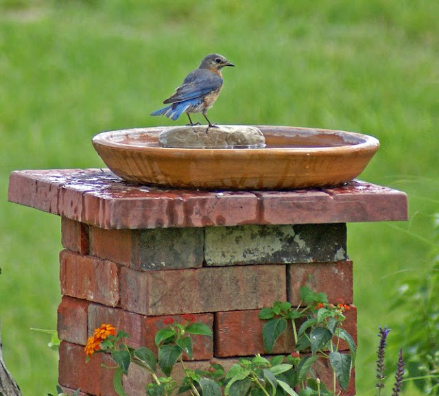 Ceramic dish birdbath nested on stacked bricks.