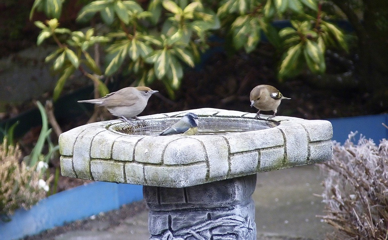 Three birds are trying to cool themselves off in a square-shaped birdbath.
