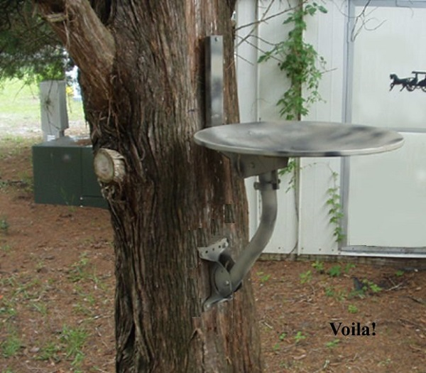 Satellite dish birdbath attached to the tree trunk.