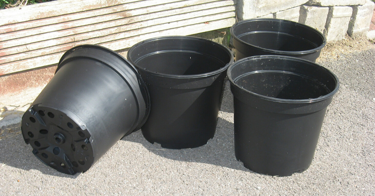 Four black plastic container pots.