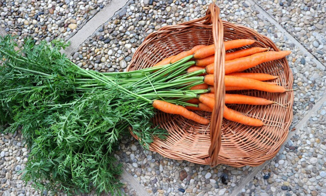 A bunch of carrots in a basket.