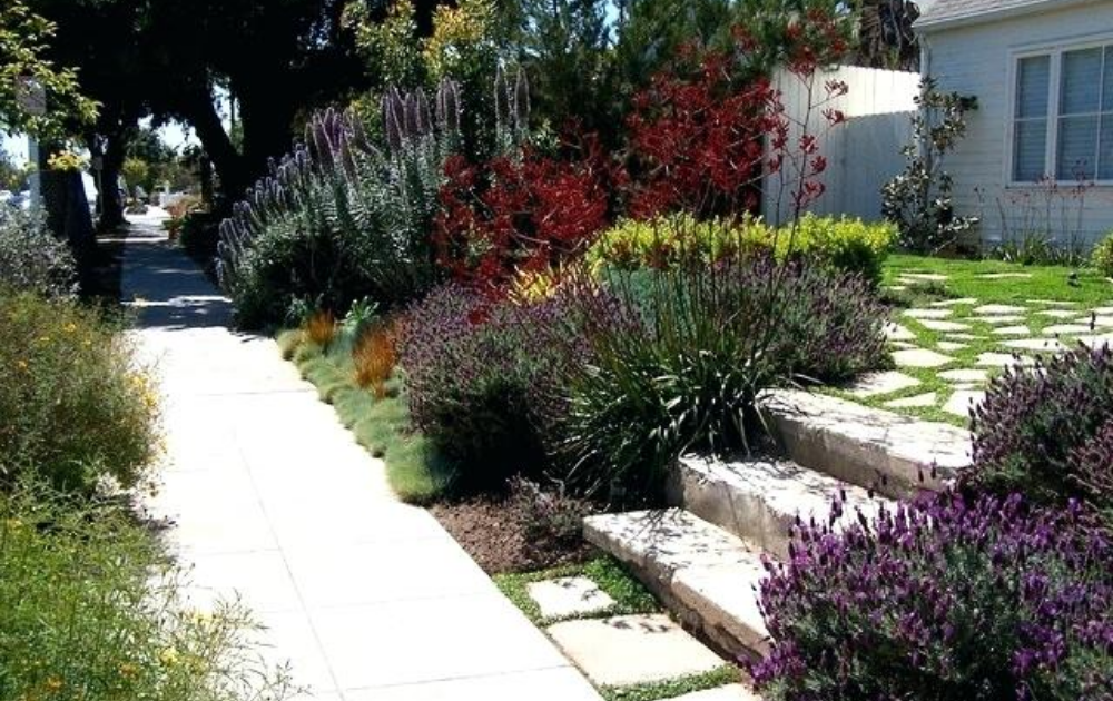 Walkways with purple tiered bushes arranged as the edges of the garden.