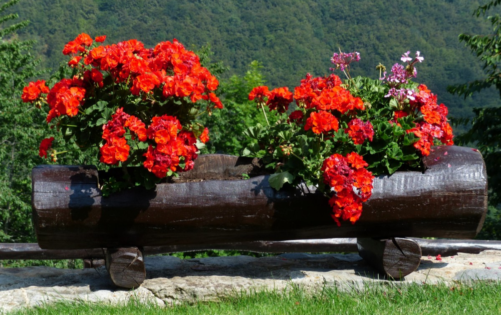 Painted log planter with orange flowers in bloom.