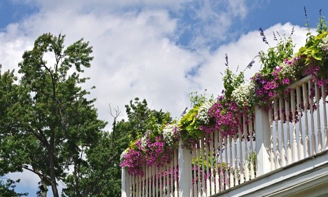 Combination of white and pink blooms on a white wooden railing