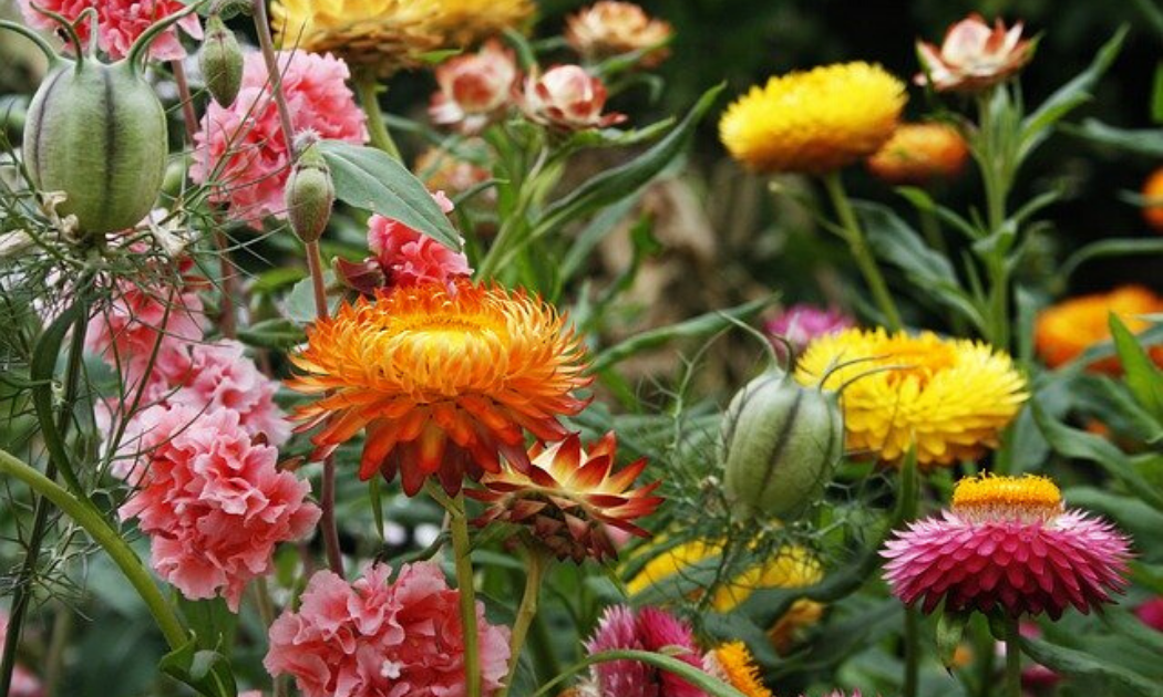 Combination of colorful flowers.