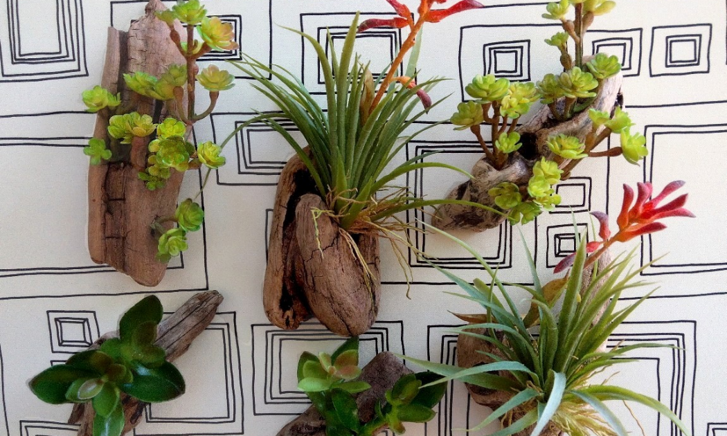 Various succulents on the wall.