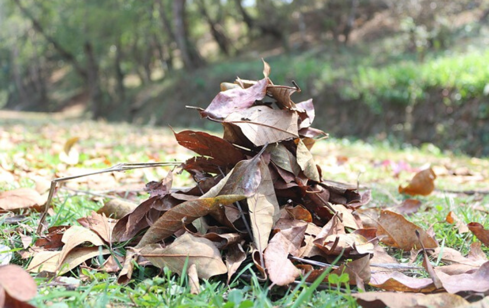 Dried leaves gathered in the ground.